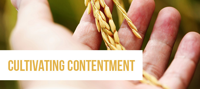 Blog<strong>Cultivating Contentment</strong>
