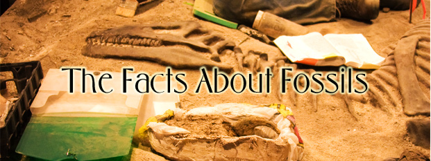 The Facts About Fossils