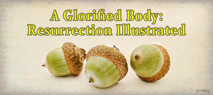 Previous post: A Glorified Body: Resurrection Illustrated