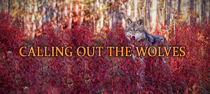 Next post: Calling Out the Wolves