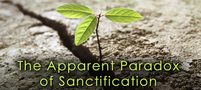 The Apparent Paradox of Sanctification